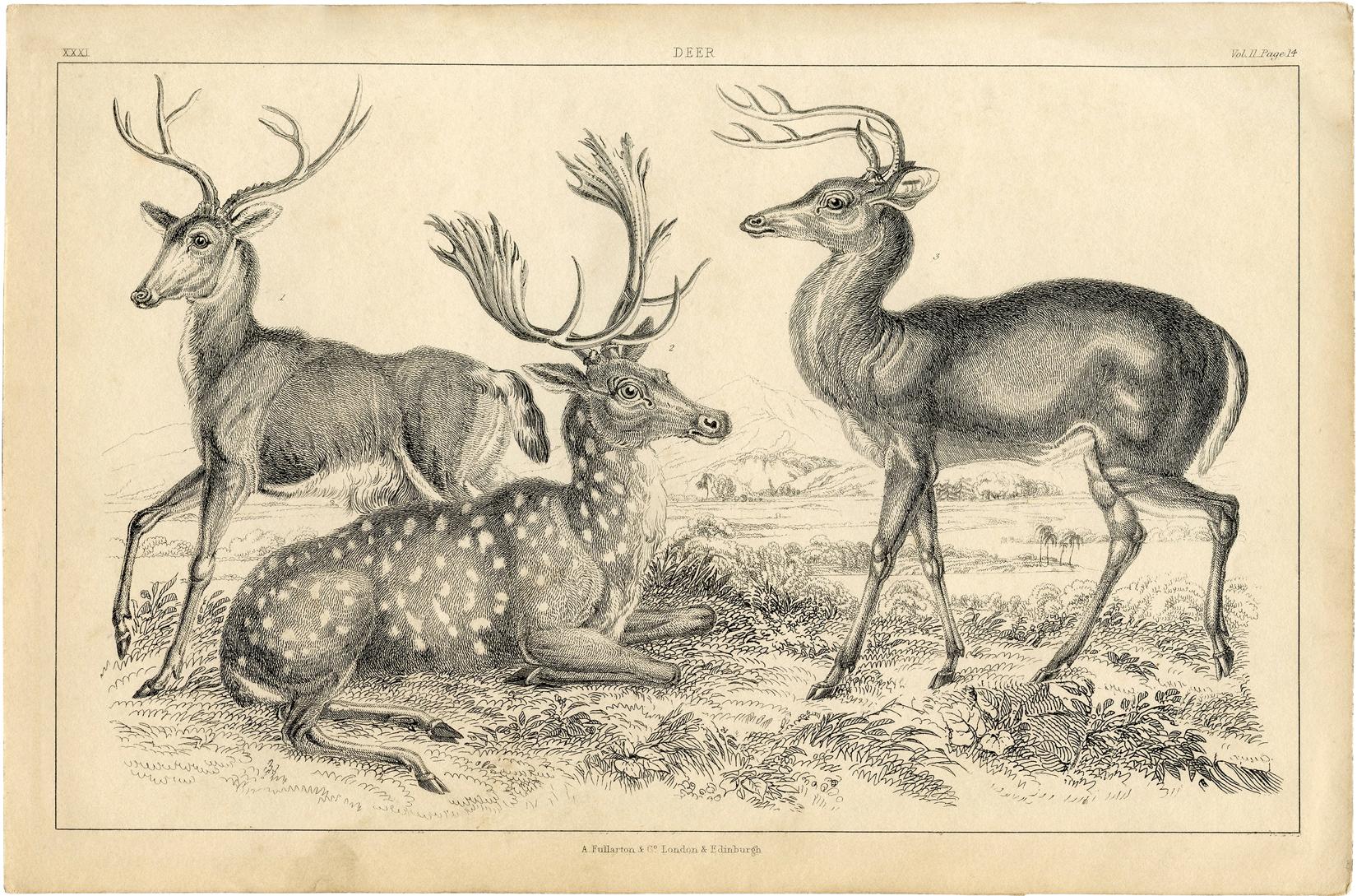 Free Deer Printable Graphicsfairy Sm