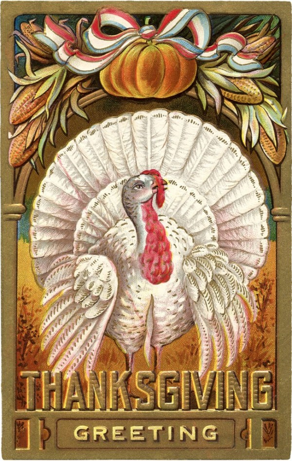 thanksgiving clip art - white turkey