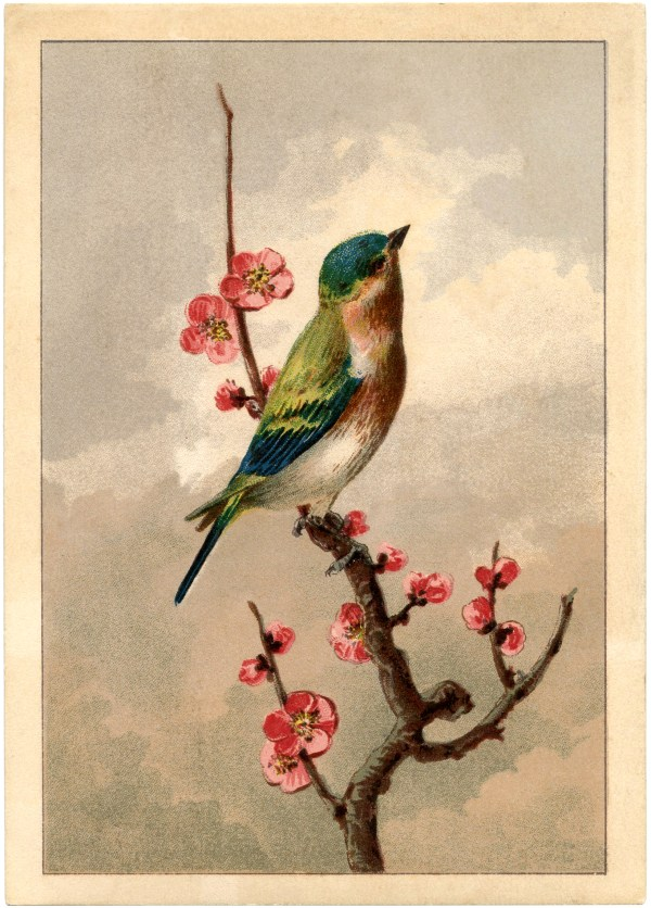 Free Bird With Blossoms - Graphics Fairy