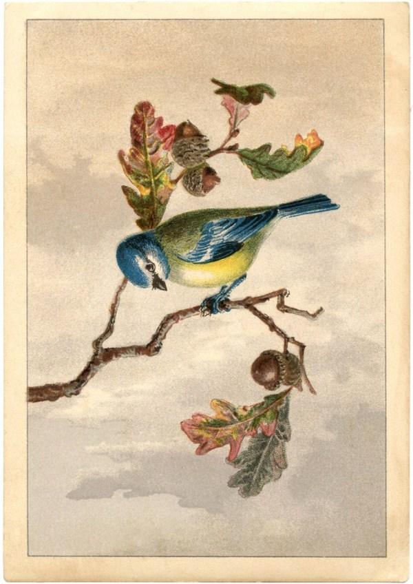 free vintage bird clip art - marvelous