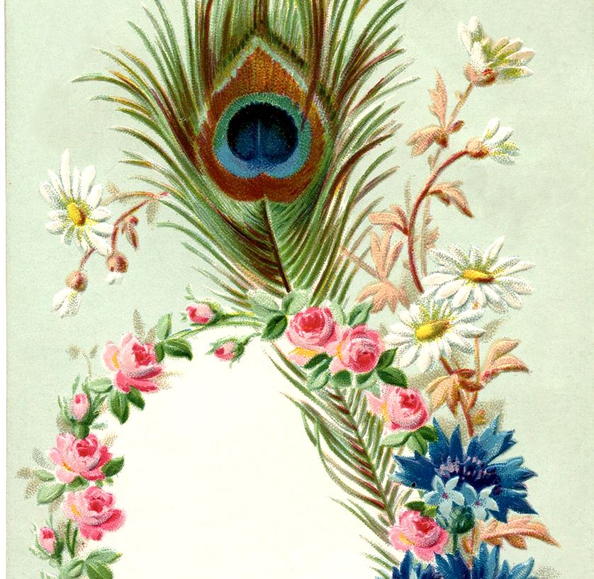 Vintage Peacock Feather Frame Image The Graphics Fairy
