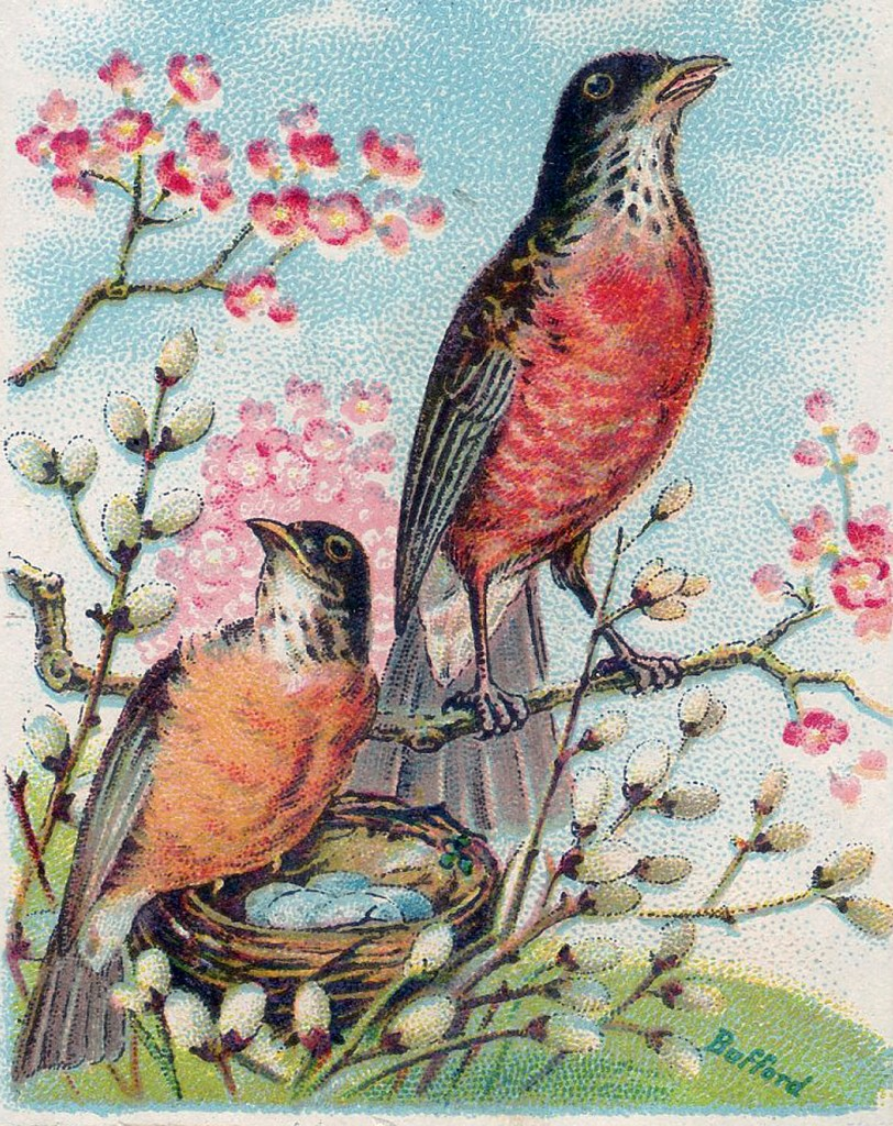 Vintage Robins Nest Image The Graphics Fairy