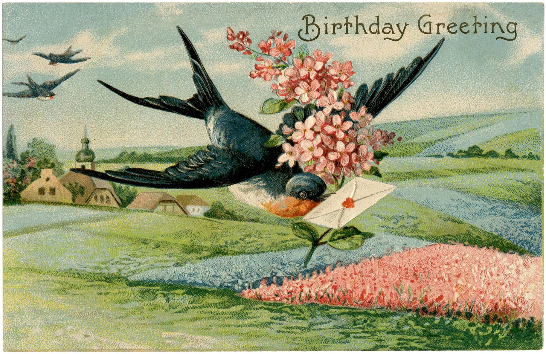Birthday Swallow Image
