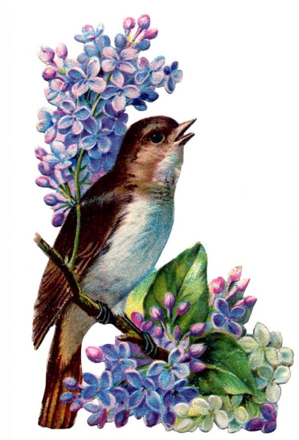 8 free clip art lilacs - graphics