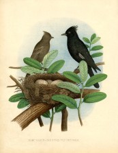 Image result for history of birds nest