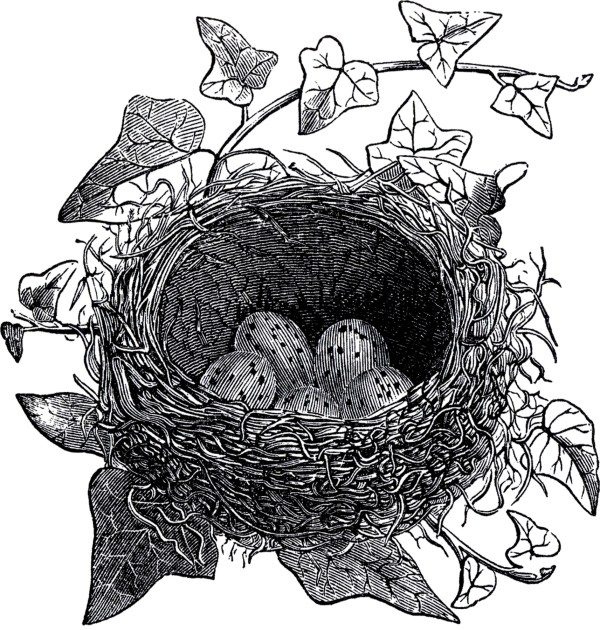 Antique Bird Nest Illustration - Graphics Fairy