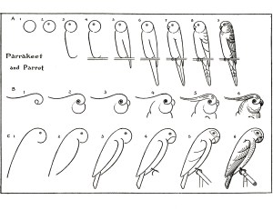 draw learn parrots step drawing adults parrot animals fairy drawings graphics easy bird sm animal thegraphicsfairy instructions printable basic read