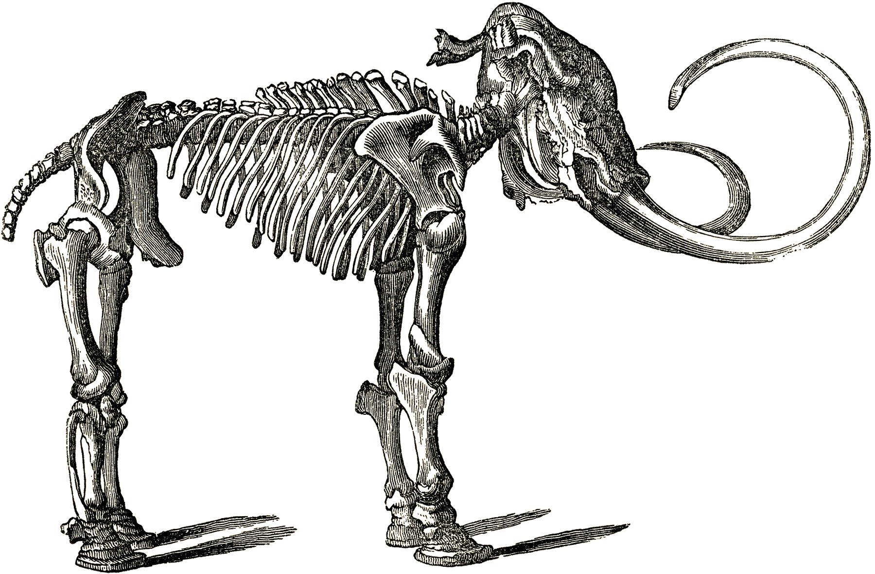Free Dinosaur Bones Clip Art