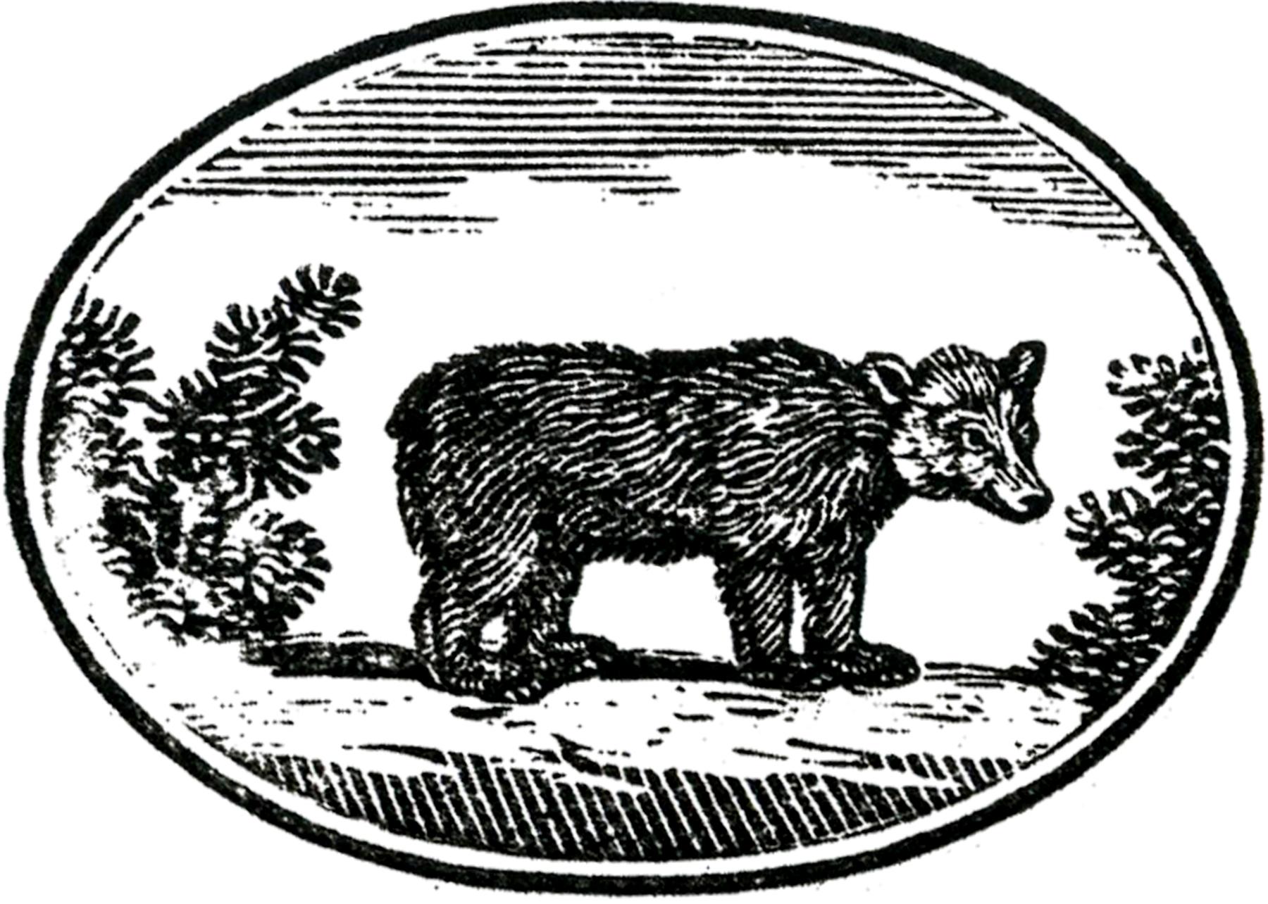 Cute Primitive Bear Image