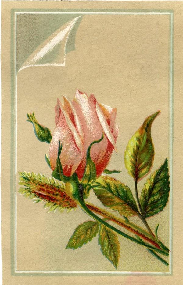 Free Vintage Rosebud - Graphics Fairy