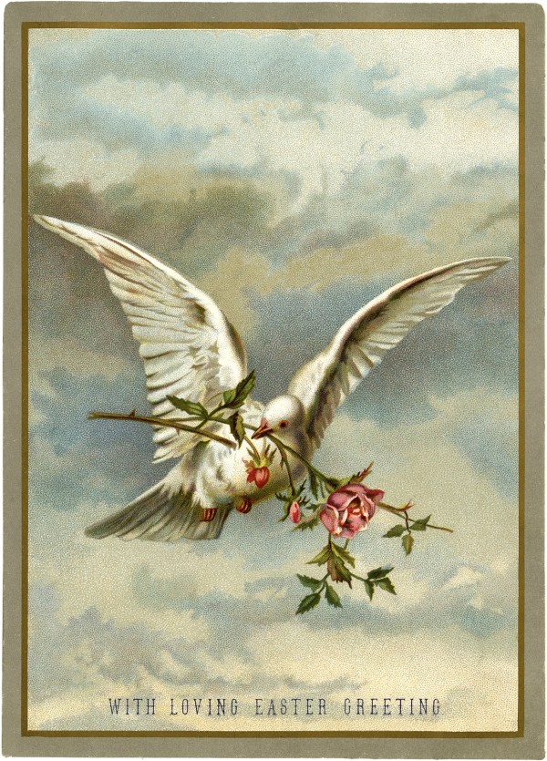 Stunning White Dove With Roses - Graphics Fairy