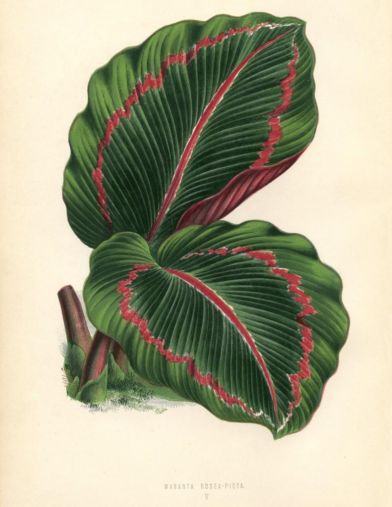 Tropical Leaves Printable