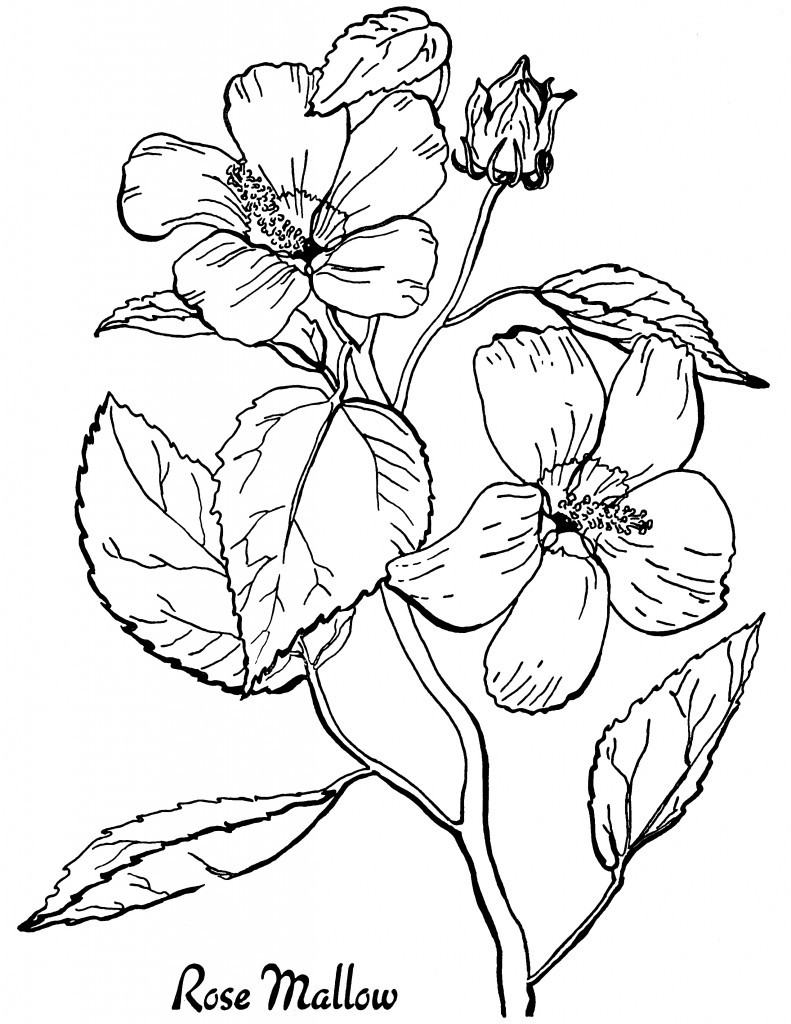 7 Floral Adult Coloring Pages - The Graphics Fairy | free printable coloring pages for adults flowers