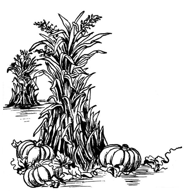 fall harvest clip art - graphics