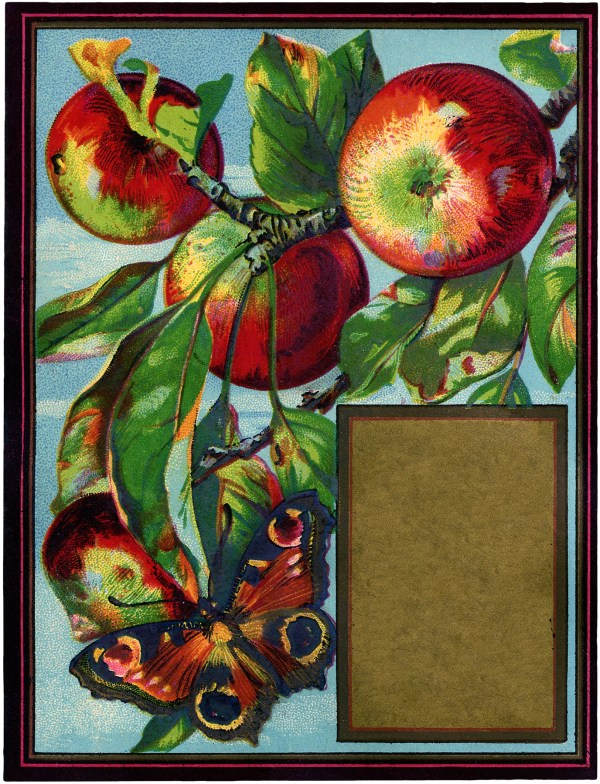 vintage apples with butterfly