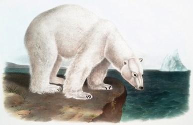 bear polar fairy graphics thegraphicsfairy