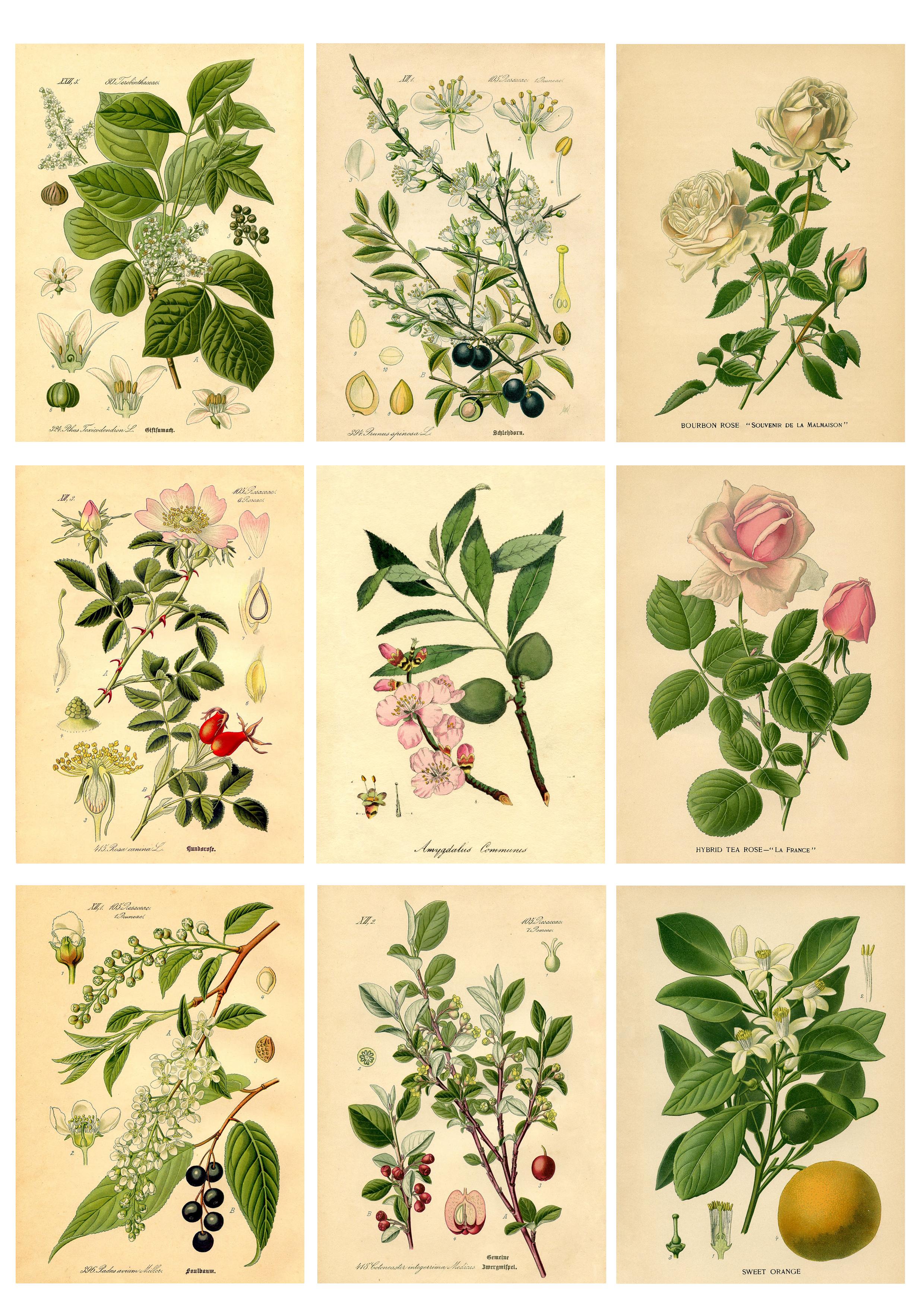 Diy Botanical Labels Or Tags
