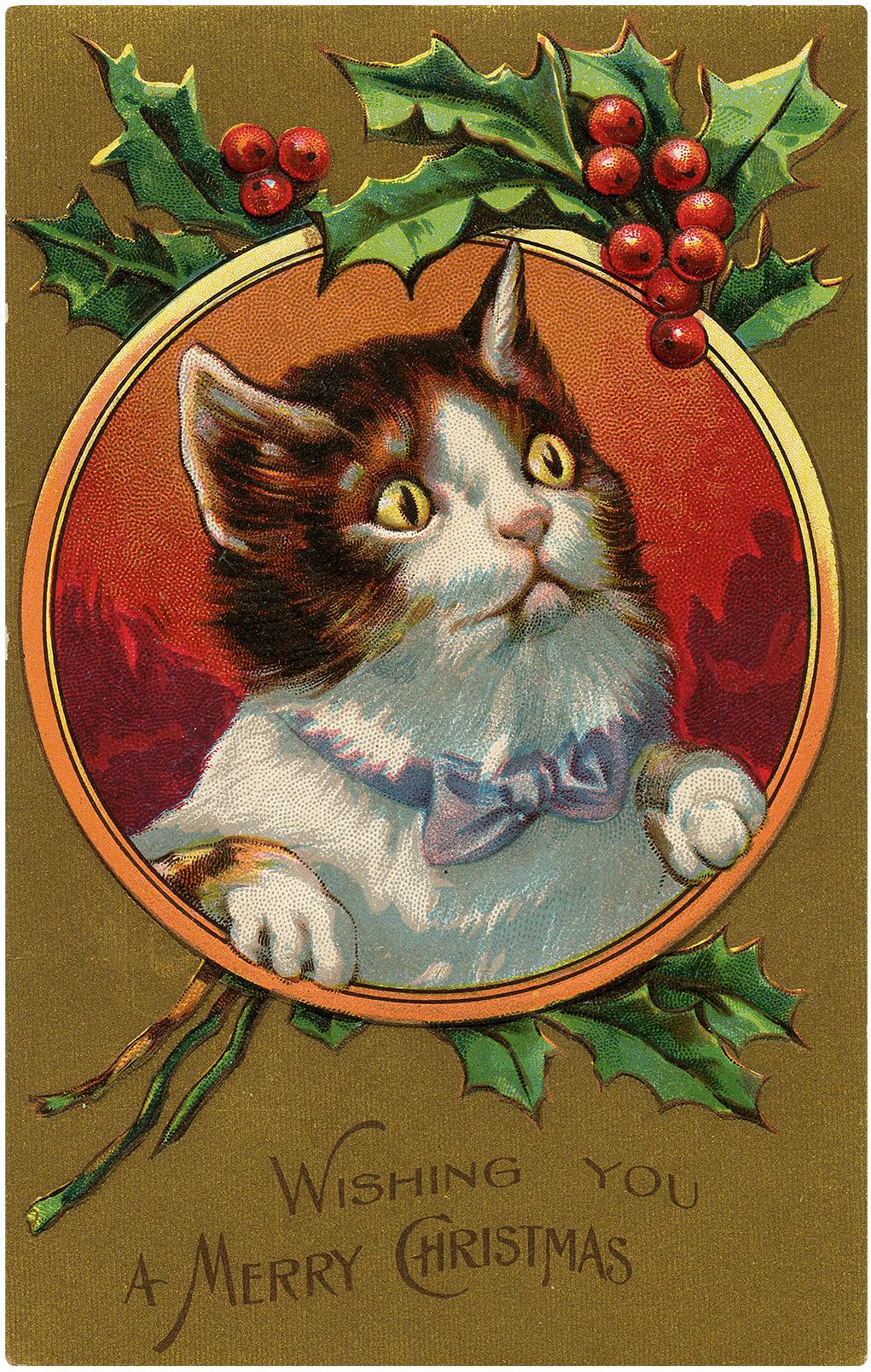 Antique Christmas Kitten Frame Postcard The Graphics Fairy
