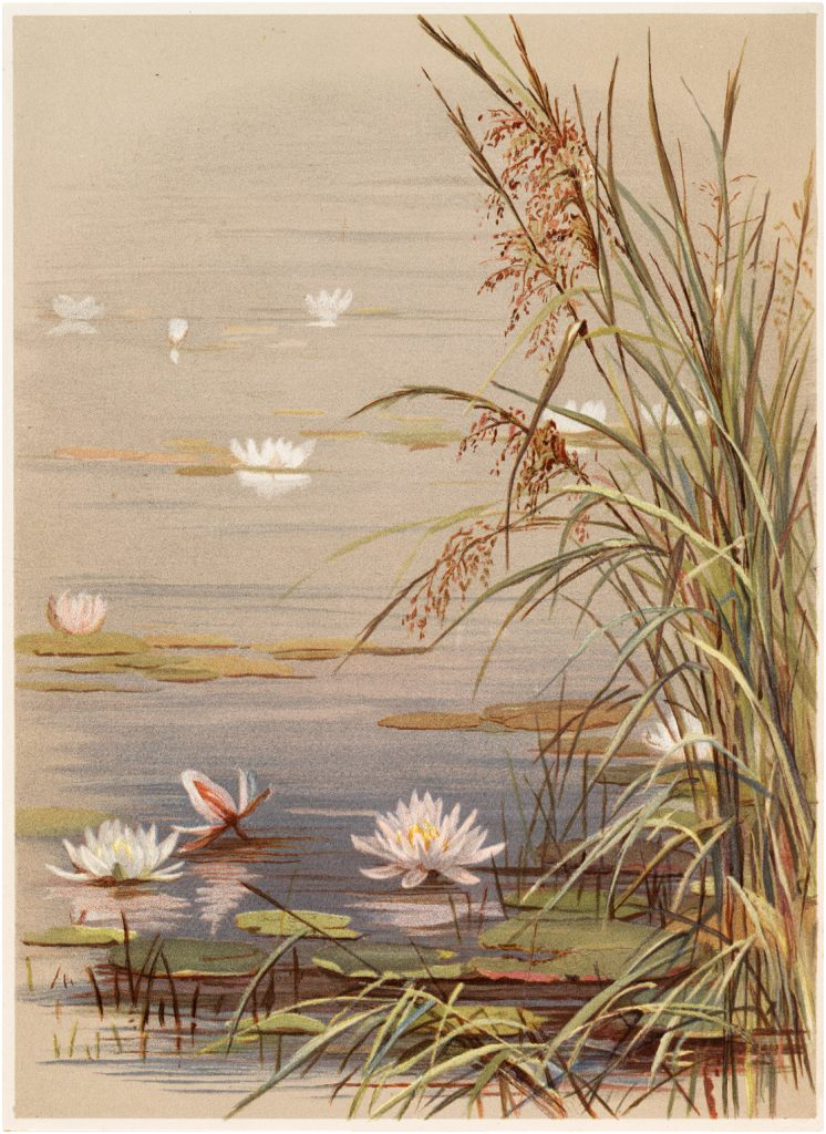 12 water lily images lotus flowers graphics fairy, love coloring book pages
