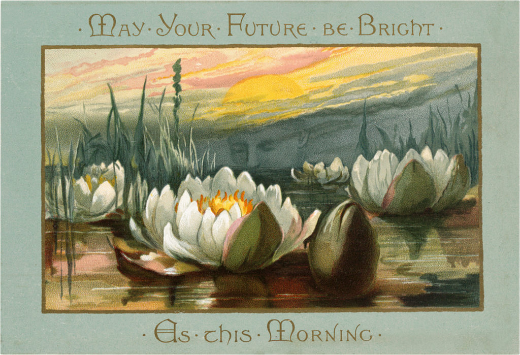 Magnificent Vintage Water Lily Postcard The Graphics Fairy