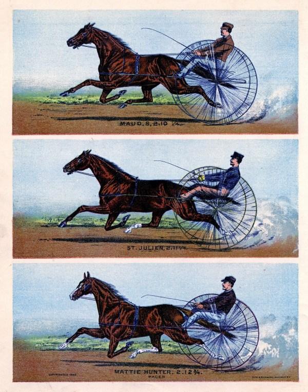Horse Clip Art - Graphics Fairy
