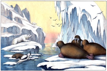 printable arctic scene polar bear clipart wildlife graphics instant clip animal fairy winter extraordinary illustration sea seals bears cliparts pdf