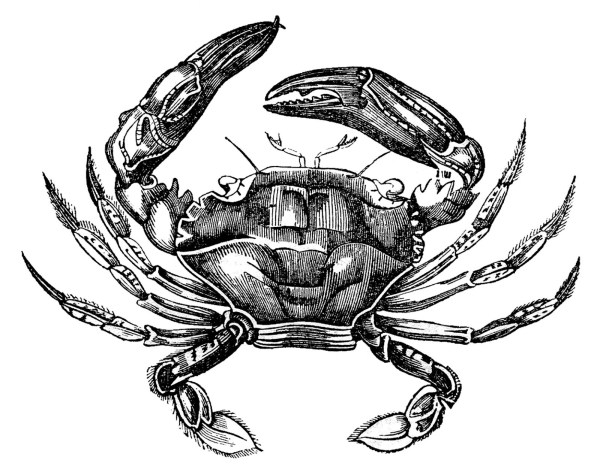 vintage clip art - 3 fine crabs