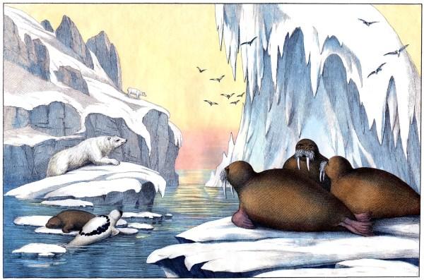 Arctic Scene with Polar Bears