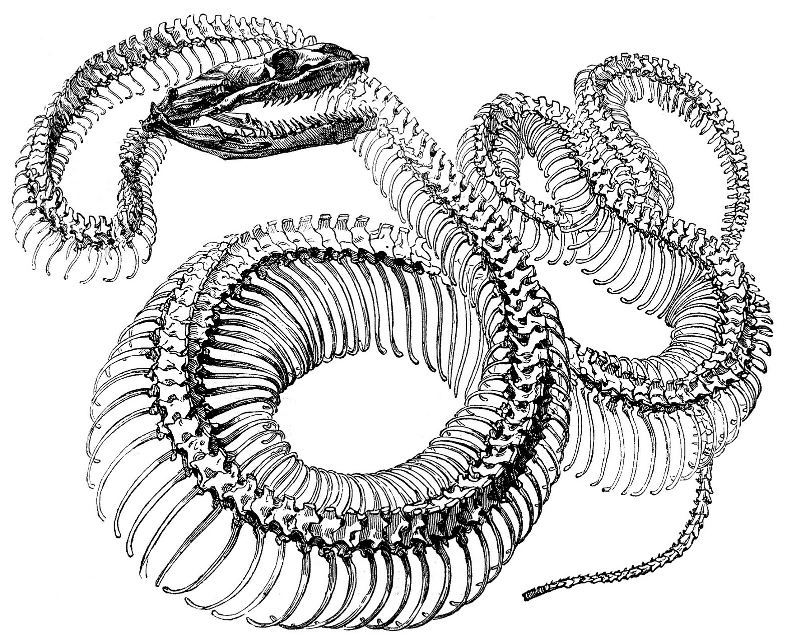 Antique Engraving Graphic