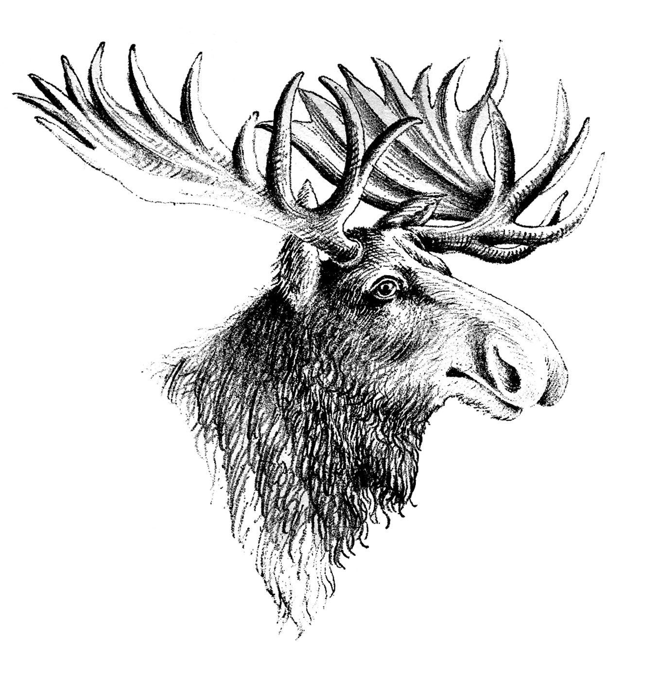 Elk Clip Art And Black And White