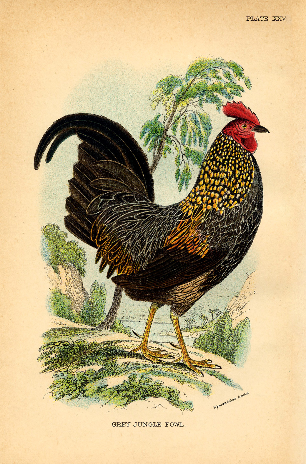 Images About Art Chickens