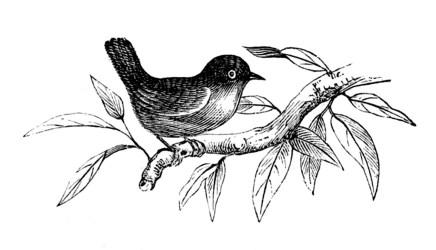 spring clip graphics bird fairy enlarge
