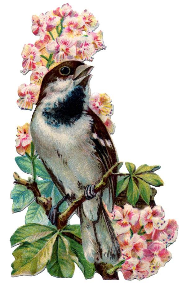 vintage graphic - pretty bird