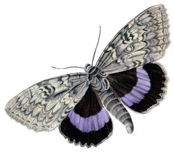 Instant Art Printable - Colorful Butterflies Moths Graphics Fairy