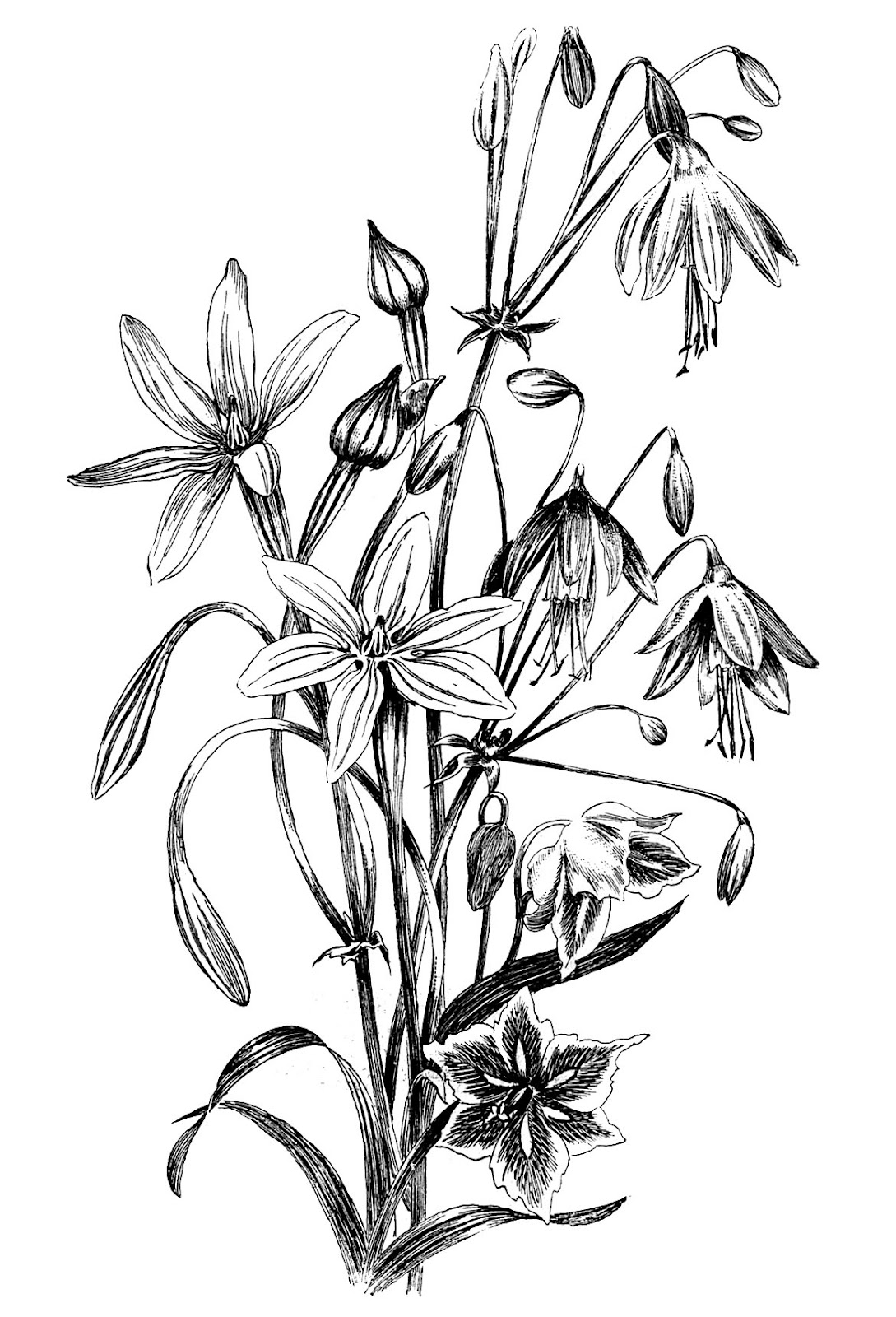 Black And White Floral Drawing