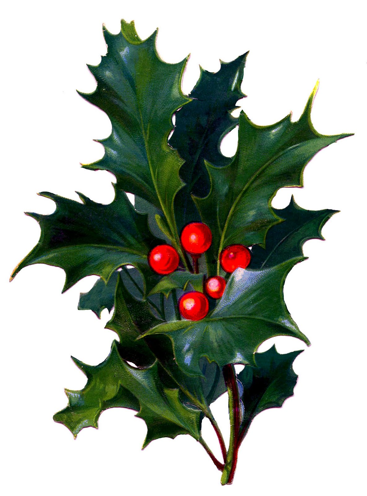 Victorian Christmas Clip Art  Holly with Bright Red Berries  The Graphics Fairy