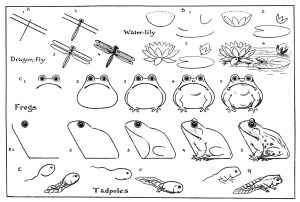 draw printable frog pdf frogs fairy