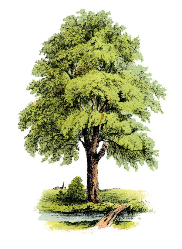 Antique Clip Art - Lovely Green Tree Graphics