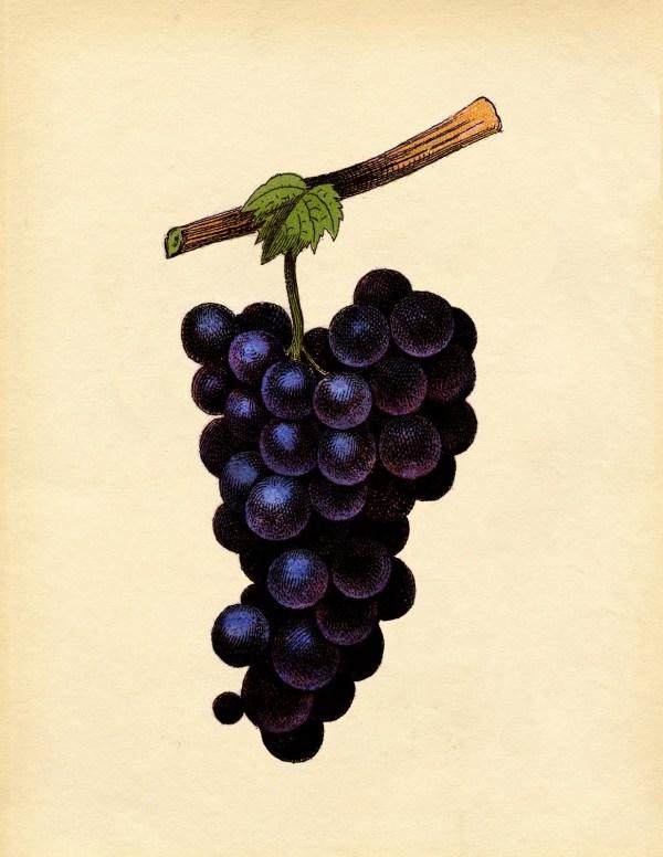 vintage printable art - purple
