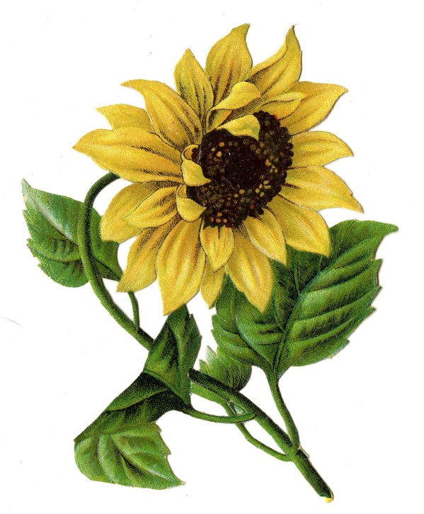 vintage - colorful sunflower