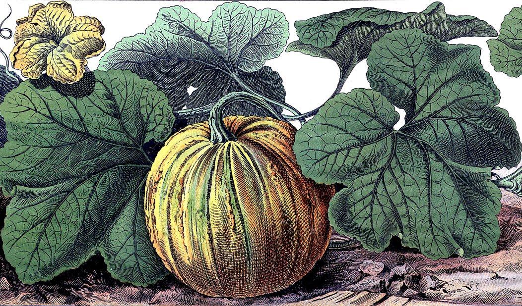 Vintage Halloween Graphic Botanical Pumpkin The