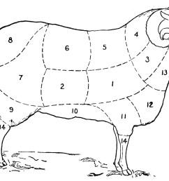 vintage clip art sheep diagram the graphics fairy body parts of sheep diagram [ 1183 x 850 Pixel ]