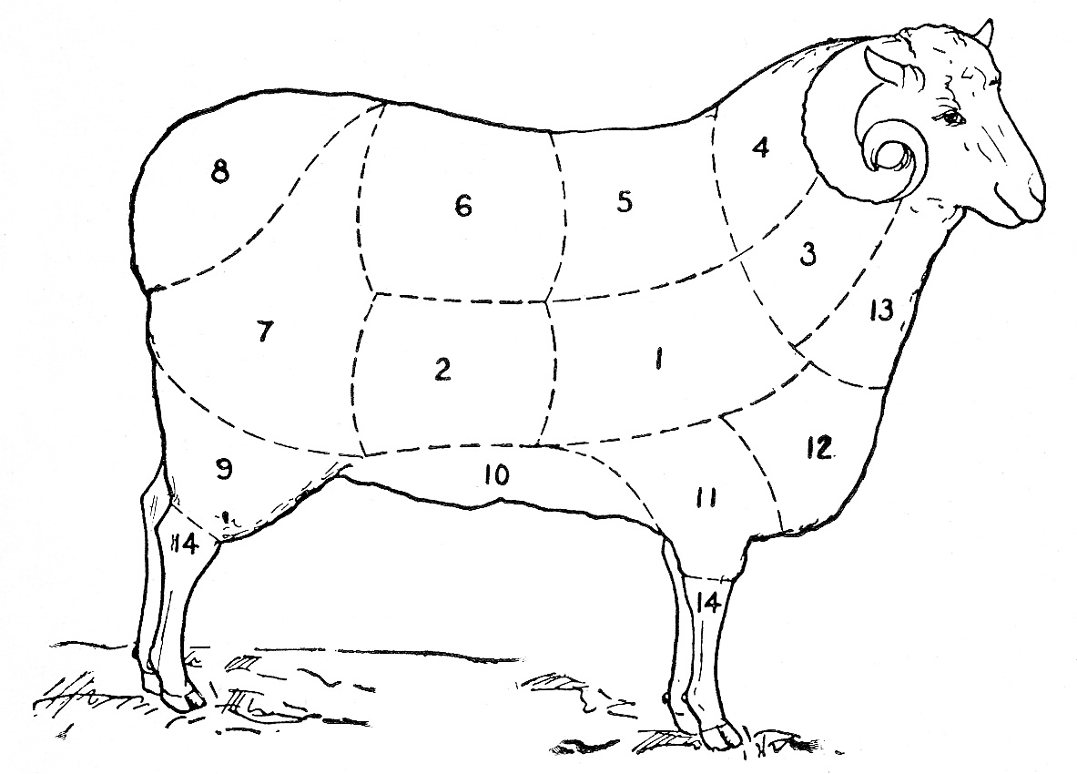 hight resolution of vintage clip art sheep diagram the graphics fairy body parts of sheep diagram