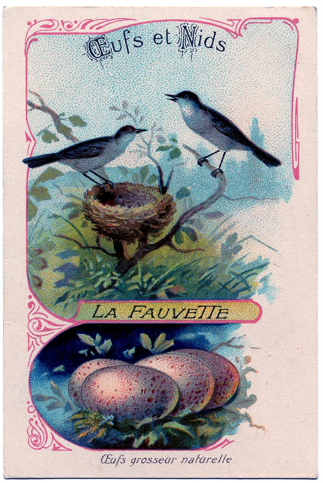 Vintage Clip Art  French Birds with Eggs  The Graphics Fairy