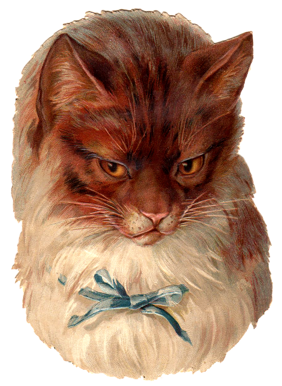 Victorian Graphic  Cat with Blue Bow  The Graphics Fairy