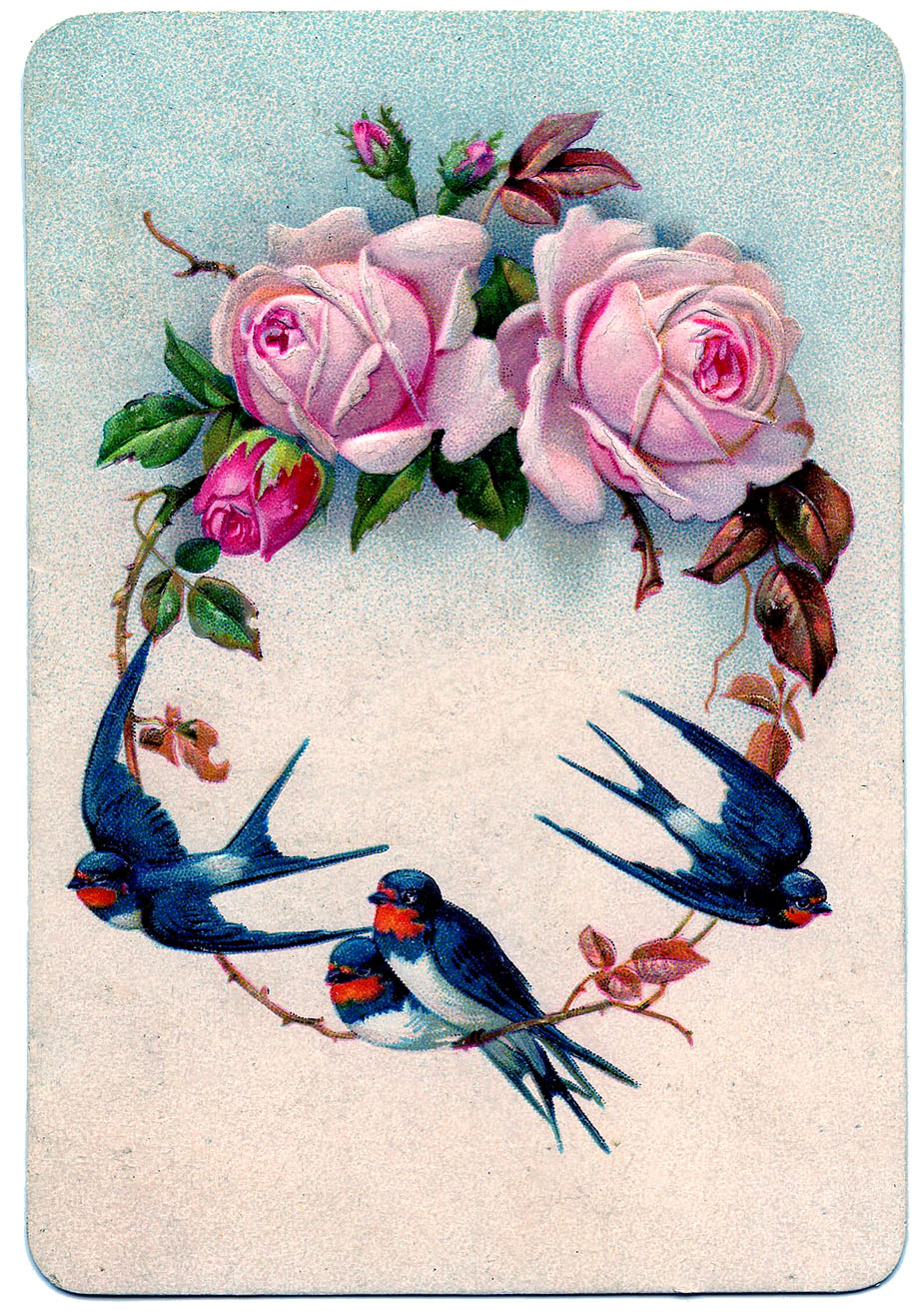 Vintage Graphic Stunning Swallow Birds With Pink Roses
