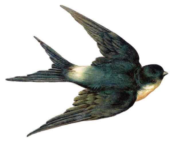 vintage clip art - bird