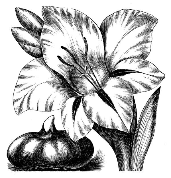 vintage clip art - flower engravings