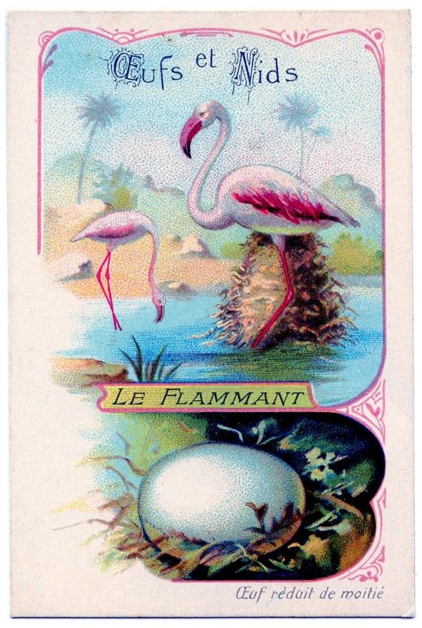 Vintage Graphic - French Flamingos & Egg