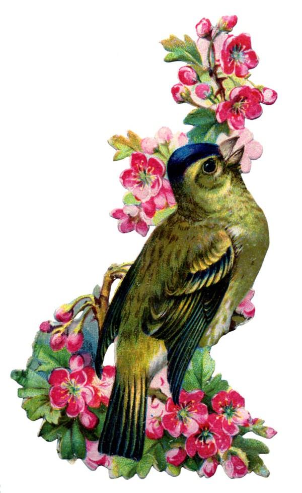 vintage - bird with pink